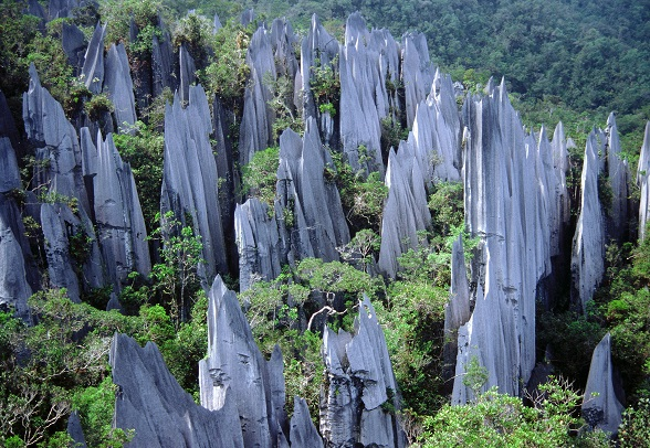The limestone pinnacles found in the Mulu National Park are truly a sight to behold.
