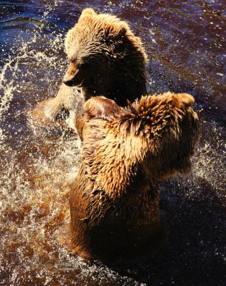 In Noorwegen leven er nog steeds wilde beren. Er wordt aangeraden om zingend of pratend door de bossen te wandelen, zodat de beren tijd hebben zich terug te trekken. Je botst liever niet op een verraste beer.