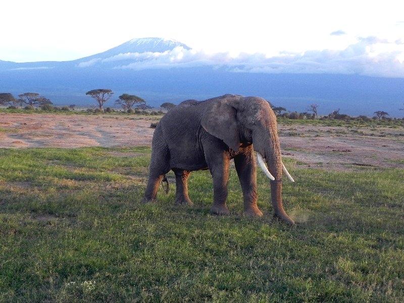Amboseli, Annemarie Elfring