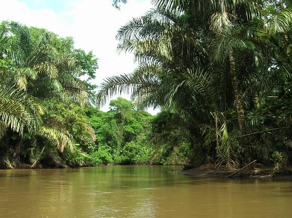 Tortuguero Nationaal Park is één van de indrukwekkendste parken van Costa Rica. De naam Tortuguero ( Spaans voor schildpad ) heeft het park te danken aan de vele schildpadden, die hier aan land komen om hun eieren te leggen.