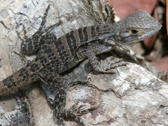 Costa Rica is een aanrader als je houdt van natuur, dieren en actieve vakanties