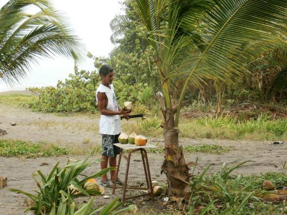 Verse kokosnoten. Rietje erin en drinken maar!