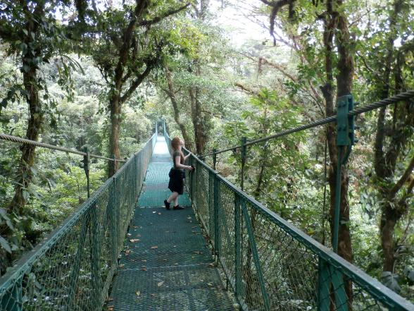 De hanging bridges van Monteverde brengen je dicht bij de boomtoppen. Daardoor kun je gemakkelijk dieren, zoals vogels en boomslangen, spotten.