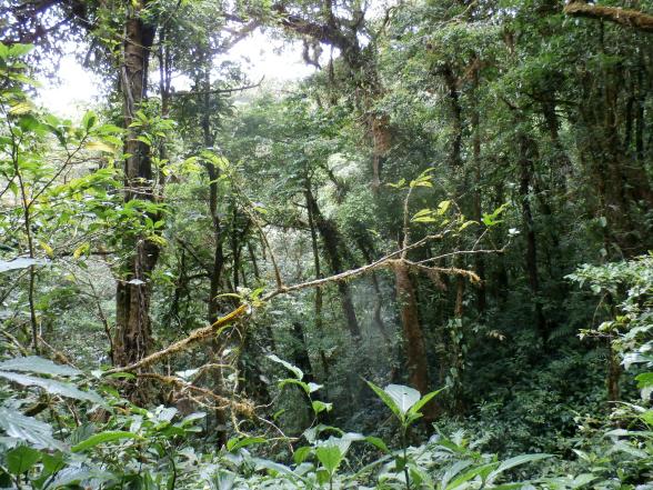 Als je van natuur en dieren houdt, ben je in Costa Rica op de goede plek!
