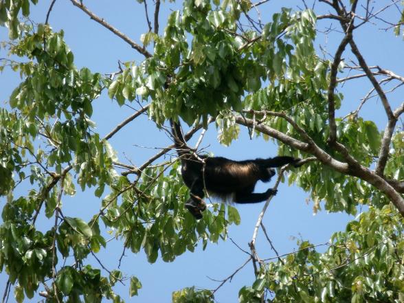 Costa Rica heeft veel nationaal parken, ieder met hun eigen charme.