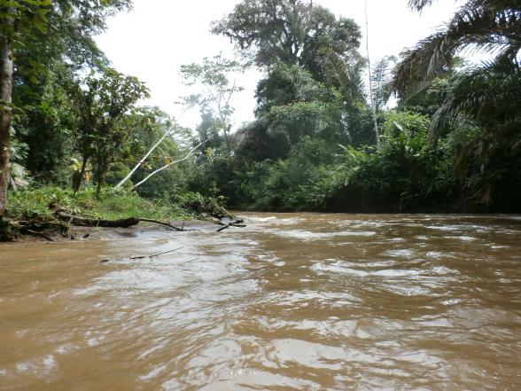 Het water vormt de aantrekkingskracht van Tortuguero. Er zijn veel junglekanalen, lang en smal.
