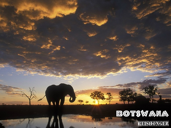 Botswana reishonger