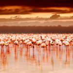 De wow-factor in Kenia
