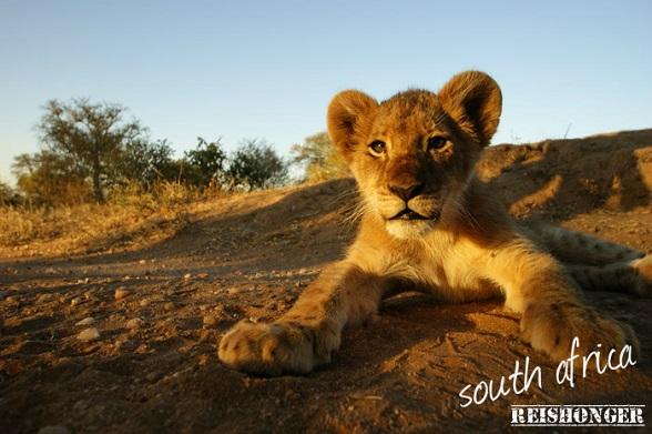 South Africa reishonger