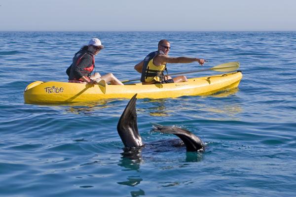 zuid-afrika-kayakken-walvis