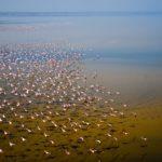 Lake Natron, plek der plekken