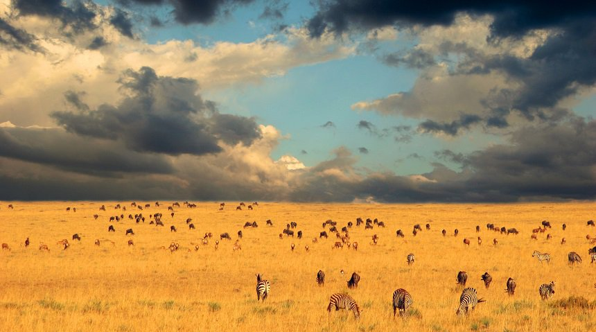 Serengeti Nationaal Park, in Tanzania.