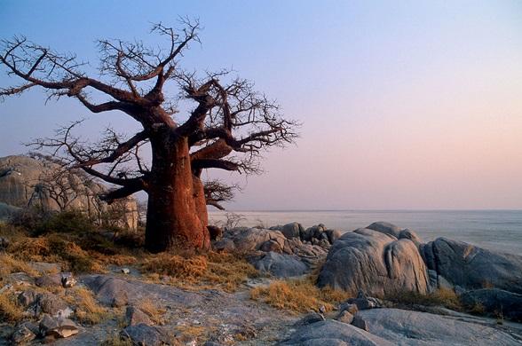 baobab rand zoutpan