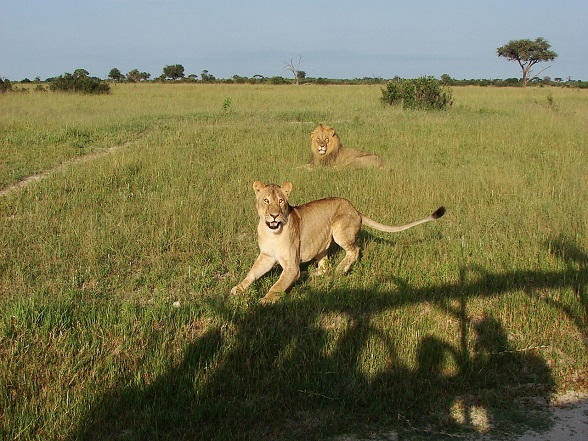 gamedrive leeuwen