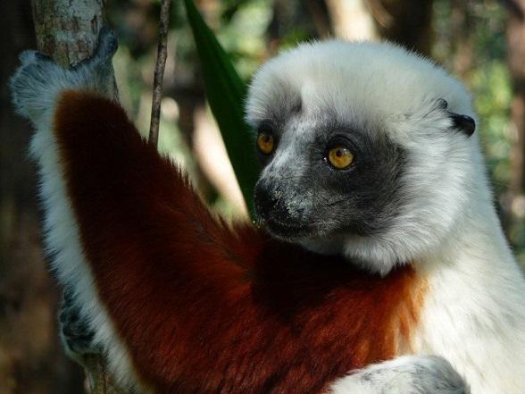 lemuren madagaskar