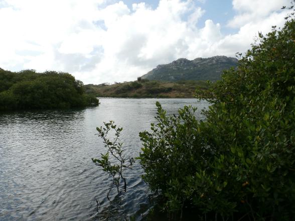 In de Piscadera Baai vind je de eerste mangroveplantage ter wereld