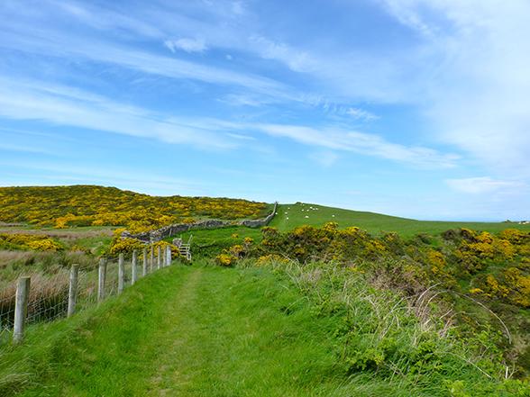 Weilanden aan de kust in Noord Ierland