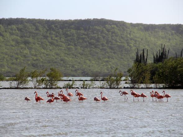 Bij de zoutpannen van Jan Kok maak je goede kans om flamingo's te spotten.