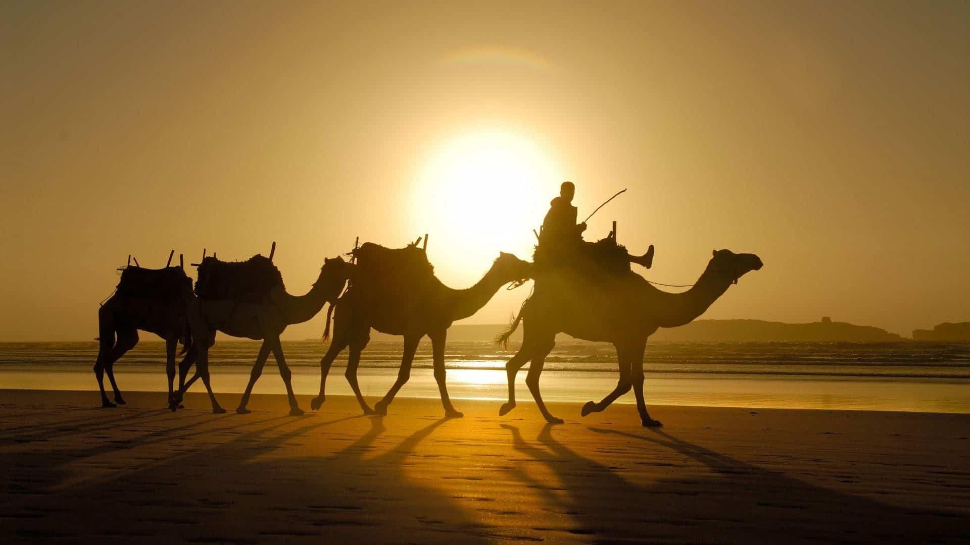 Reizen naar Marokko