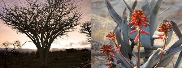 De natuur van Kenia is echt prachtig, met ontzettend veel flora en fauna