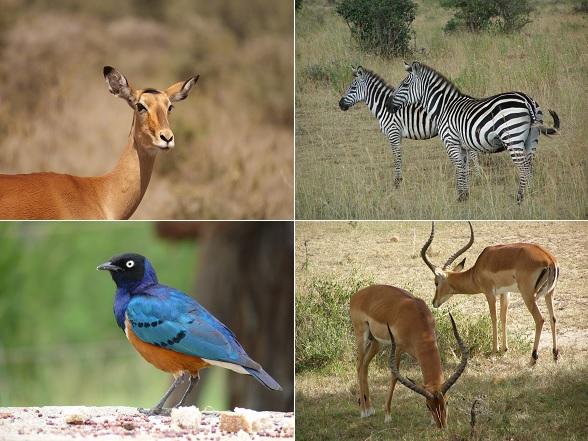 Qua dieren biedt Kenia veel meer dan alleen de Big Five!