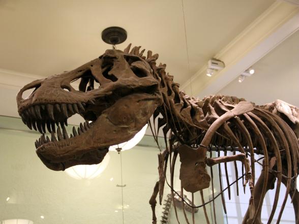 Het American Museum of Natural History heeft een uitgebreide collectie van dinosaurusskeletten en bevat uitgebreide informatie over hun ontstaan en leven