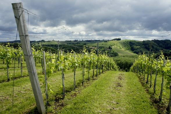 Overal in Slovenië vindt je wijngaarden, maar nergens zijn ze zo mooi als in de Pomurjeregio.