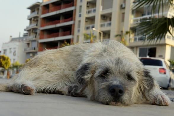 Honden zijn hier stadsburgers. Ze worden verzorgd door een speciale eenheid in de stad en gevoerd door hun menselijke medebewoners.