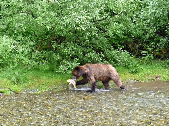 canada grizzly stewart hyder