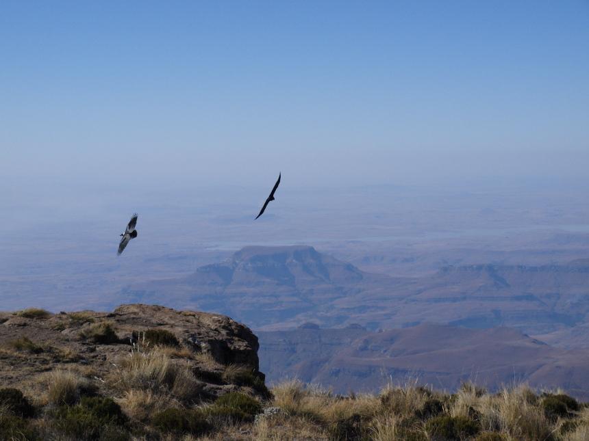 Drakensberg 3 medium