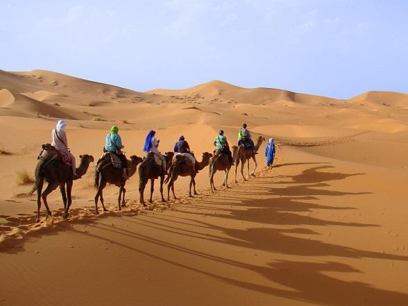 marokko kamelen