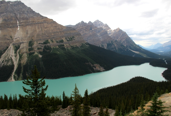 Peyto Lake Viewpoint is het mooiste viewpoint langs de Icefields Parkway
