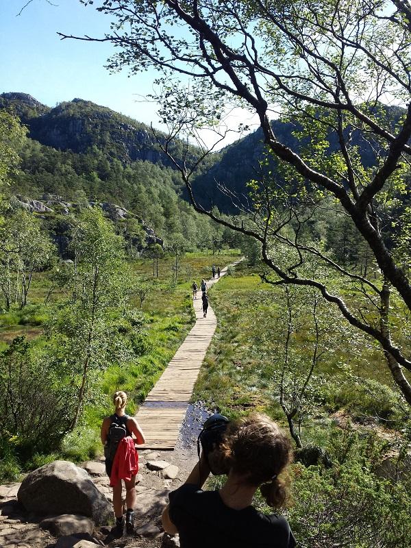 a dry path through the bog