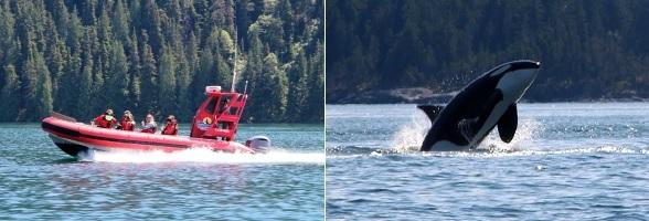 Orka's spotten op Vancouver Island