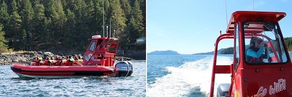Orca's spotten in Canada met een zodiac boot