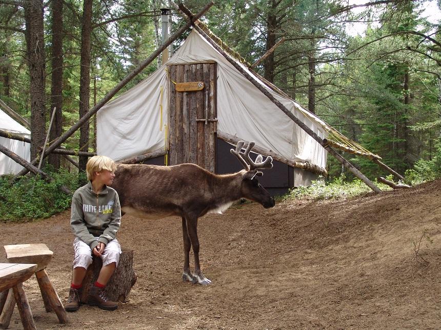 Op het meest noordelijke deel van je reis maak je op een bijzondere manier kennis met de natuur van het Hoge Noorden. In een safaripark kun je een kijkje nemen achter de schermen, bezoek je het verblijf van de poolberen en wandel je naar een tentenkamp midden in het bos. De kariboes lopen om het kamp, het eten wordt bereid op een kampvuur en 's avonds krijg je bezoek van een heel bijzonder figuur…