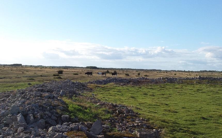 Het agrarisch landschap in het zuiden van Öland (Alvaret) staat op de Werelderfgoedlijst van de UNESCO. Je ziet het gebruik van het land terug in patronen in dorpen en land en dat maakt dit gebied, met de manier waarop dit de afgelopen 5000 jaar bewerkt en begraasd is, uniek