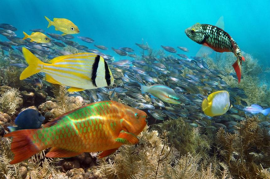 Aruba is zeer geliefd bij snorkelaars en diepzeeduikers vanwege de prachtige koraalriffen.
