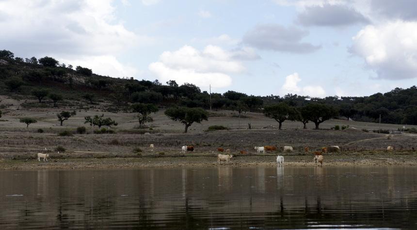 Een groot deel van Alentejo is boerenland
