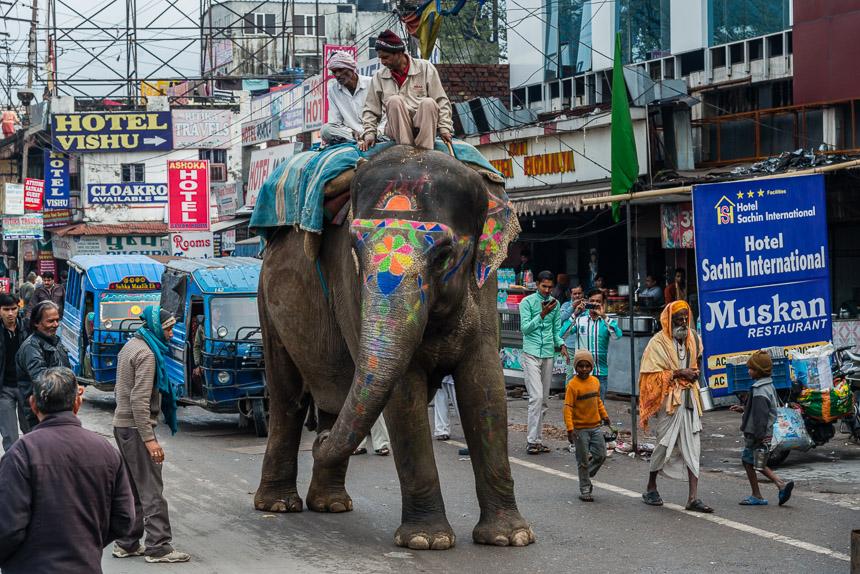Haridwar - Olifant op straat