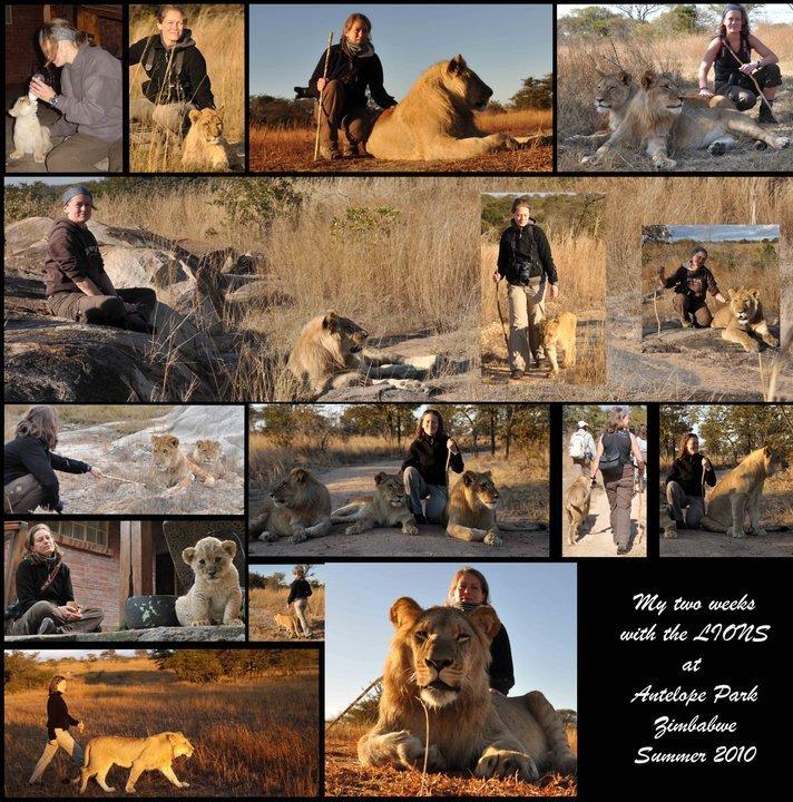 Leuke plaatjes maar je helpt het leeuwenbehoud hier echt niet mee! Sommige van deze organisaties worden gelinkt aan het verschrikkelijke fenomeen canned hunting