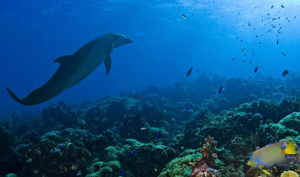 Dolphin Academy - dolfijnen spotten op Curacao