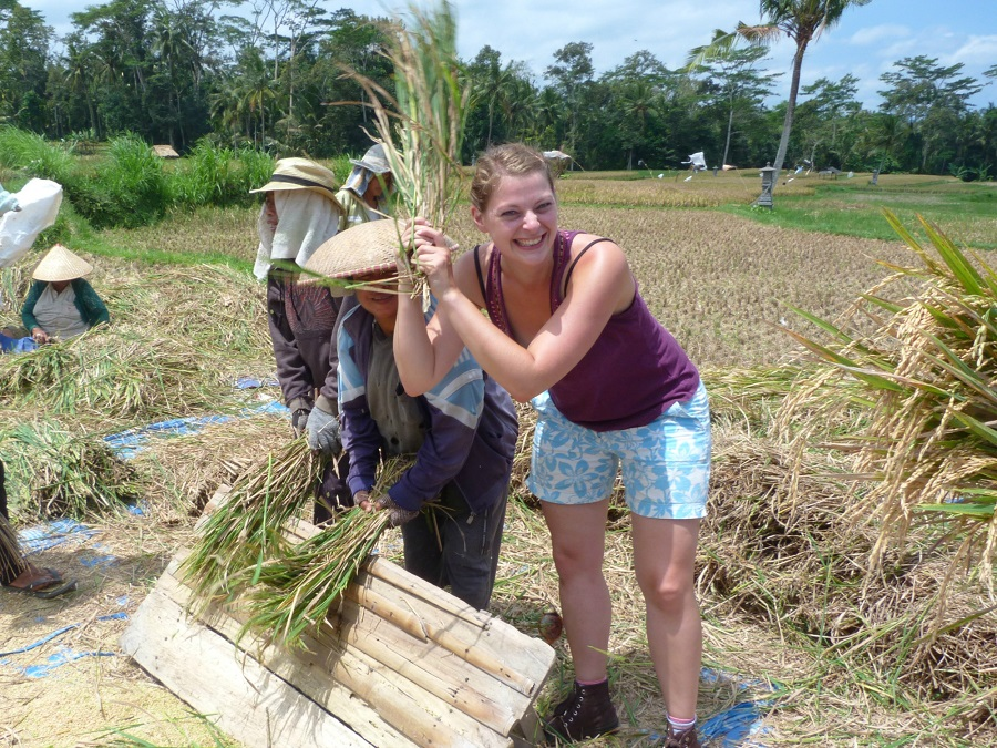 Meehelpen op een rijstveld