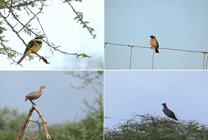 Vogels spotten in Kenia