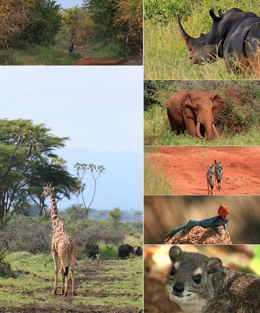 wildlife meru en kora