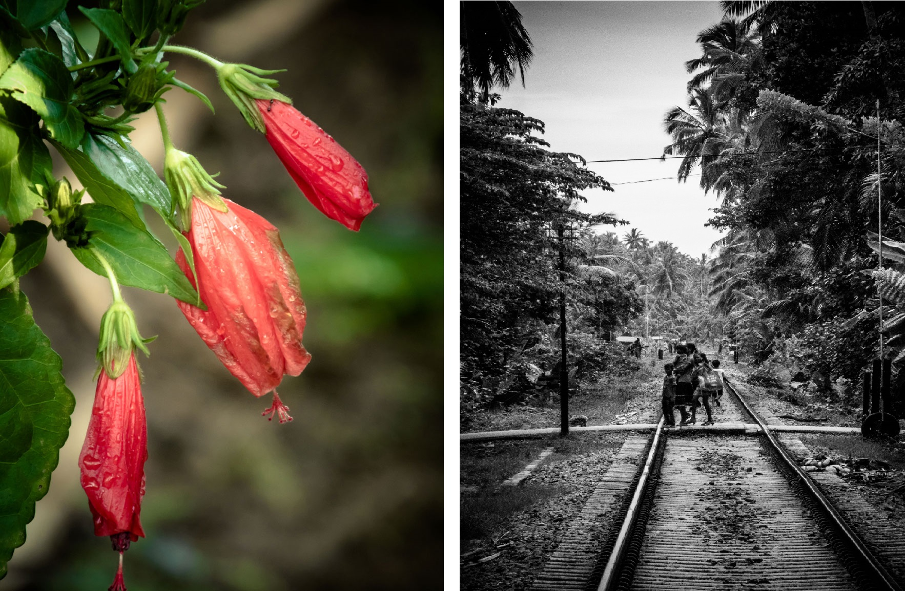 Foto's Sri Lanka