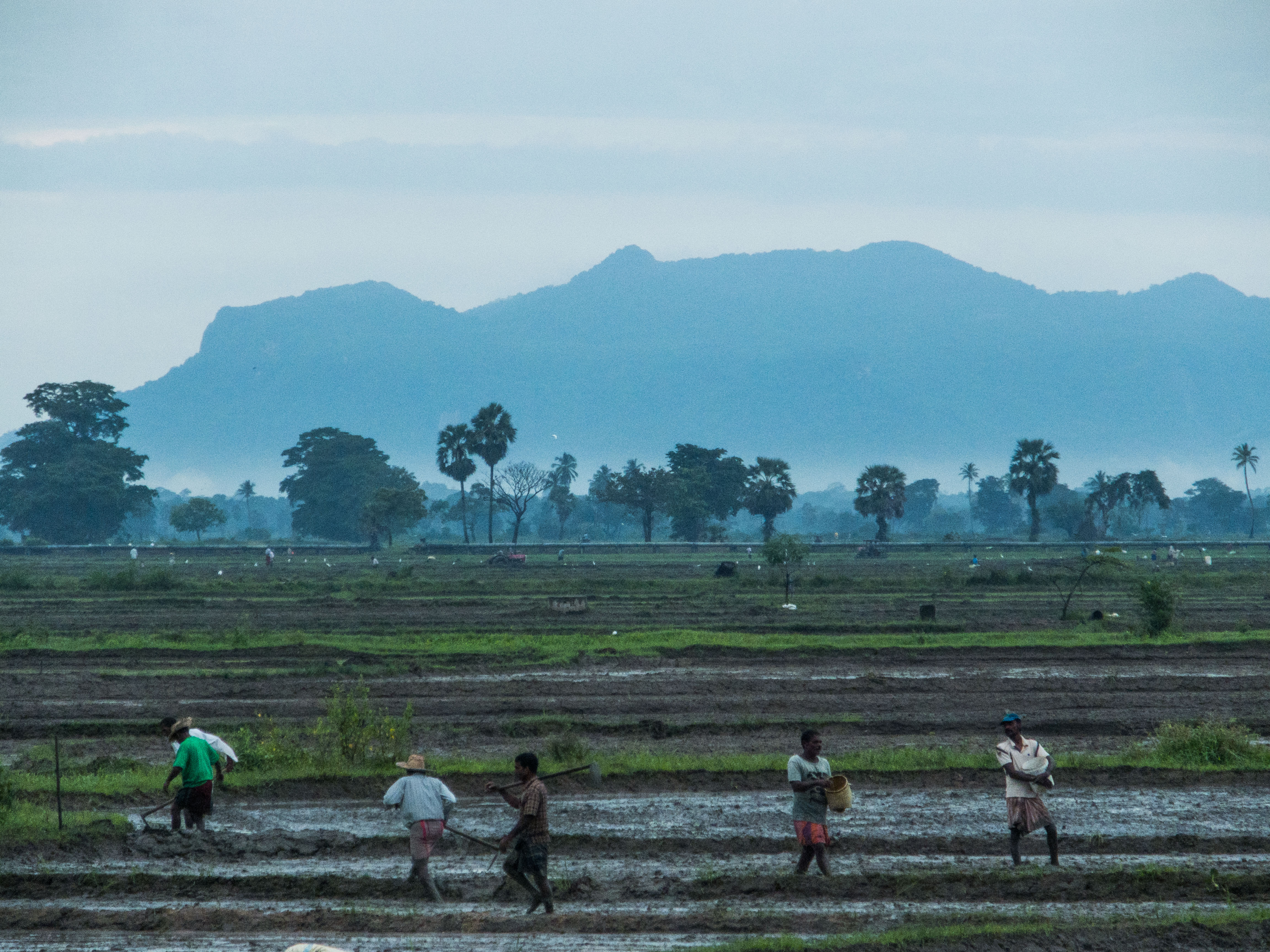 handenarbeid op de rijstvelden