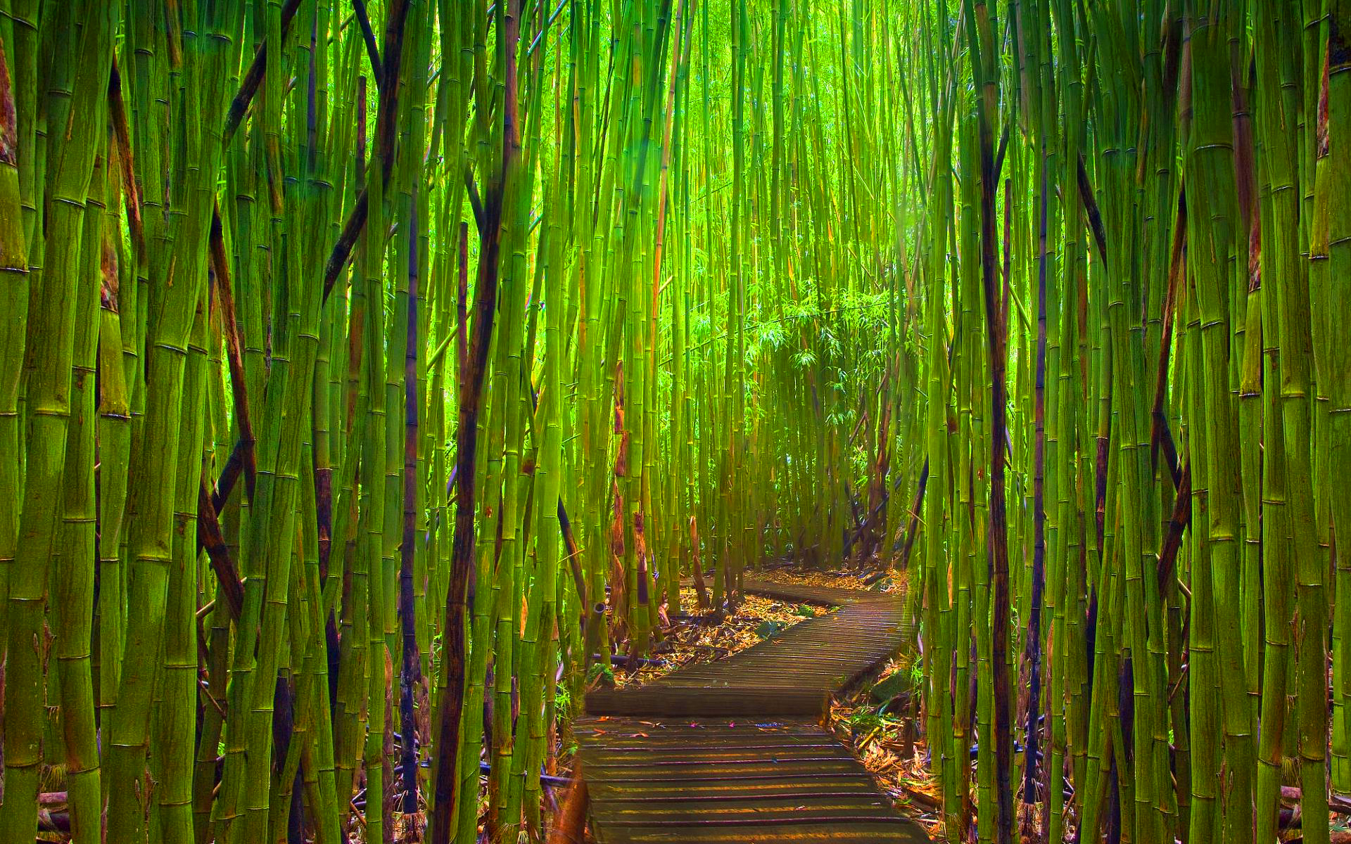 Duurzame kleding van bamboe