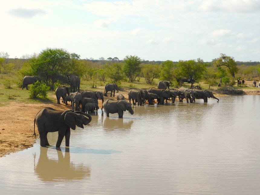 olifanten-zuid-afrika