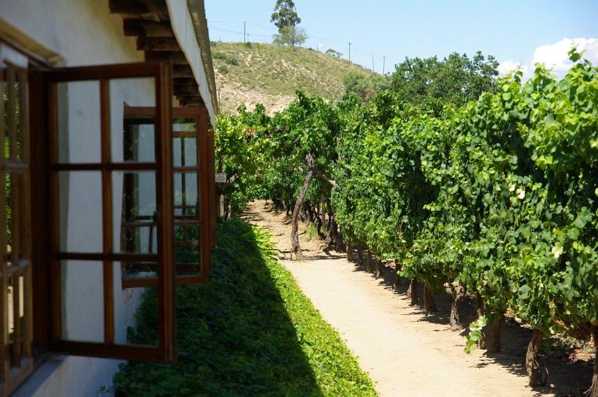 Vanuit het raam stap je zo de wijngaarden in.